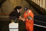 Merrimack salmon restoration program to end