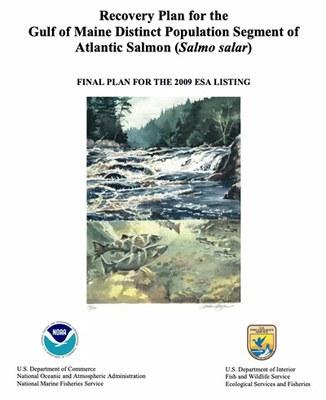 NOAA and USFWS Release Atlantic Salmon Recovery Plan