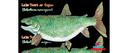 Flat Lake Trout  (24x14)