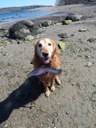 Bailey and his fish are on the Eastern side of Sears island at low tide