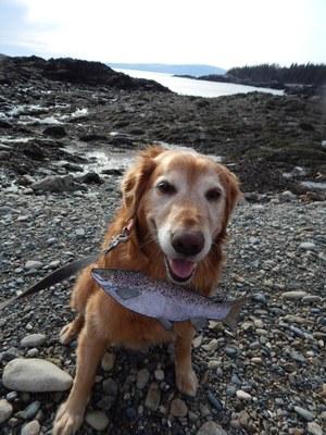 Bailey's Salmon 4