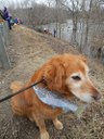 Bailey and flat salmon at Kenduskeag Race at Six Mile Falls