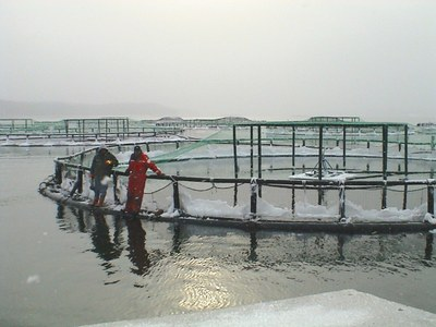 Maine Salmon Farming Management an Example to Emulate says ASF