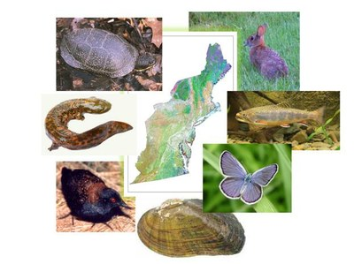 Regional Context for Northeast Conservation Action