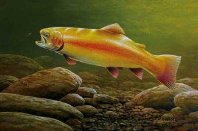 Maryland Trout Unlimited earns Gold Trout for conservation work in Chesapeake Bay watershed