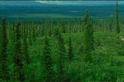 Climate Change and Southern New England Forests