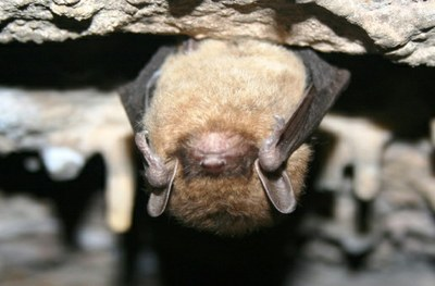 FWS invites proposals for White-Nose Syndrome small grants program