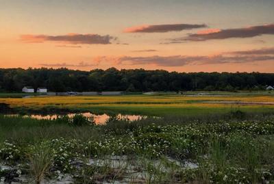 How healthy are coastal habitats?
