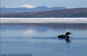 Adding depth to aquatic data in the Northeast Region