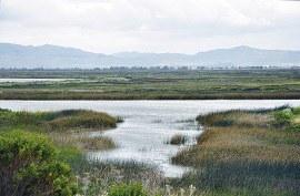 New Report Reveals Continuing Coastal Wetlands Losses in U.S.