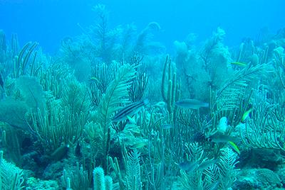 Looking for common language to integrate marine habitat data