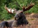 Partnerships: Moose