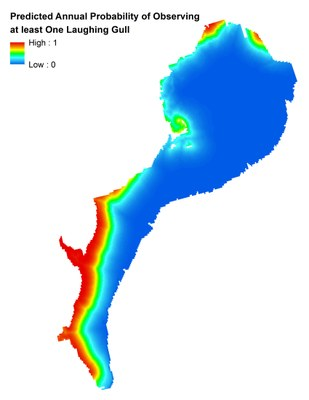 Marine Bird Mapping and Assessment