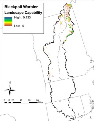 Landscape Capability for Blackpoll Warbler