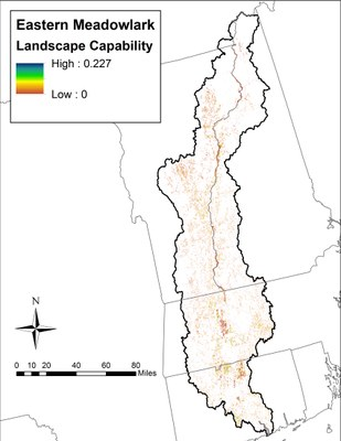 Landscape Capability for Eastern Meadowlark