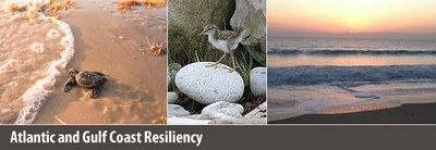 Atlantic and Gulf Resiliency Collage