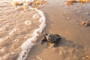 Atlantic and Gulf Coast Resiliency